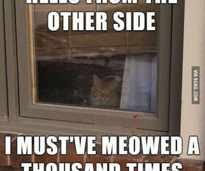 Adele, cat, and funny image
