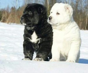 cute lovely dogs image