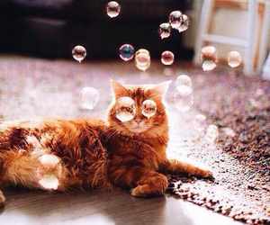 cat, animal, and bubbles image