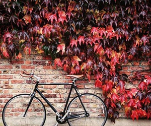 art, bike, and flower image