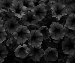 black and white, myphoto, and flowers image