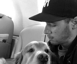 nick jonas, dog, and cute image