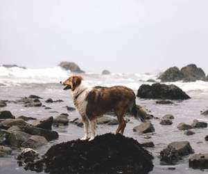 dog, animal, and sea image