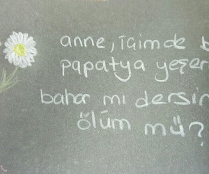 daisy, papatya, and türkçe sözler image