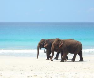 elephant, beach, and animal image