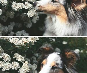 animals, nature, and beautiful image