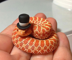 snake, animal, and hat image