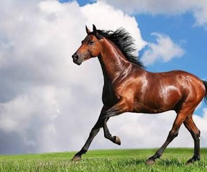 animal, cool, and horse image