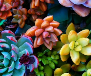 colors and succulents image