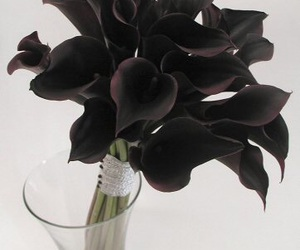 beauty, black flowers, and black image
