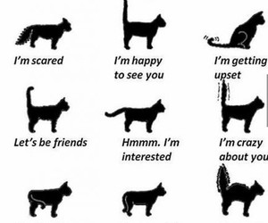 cat, tail, and speak image
