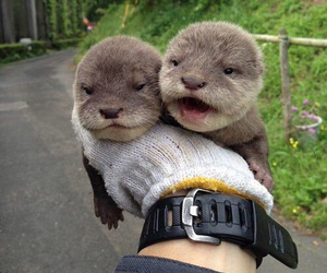 animal, cute, and otter image