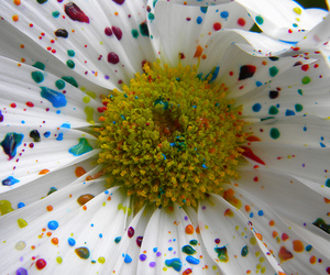 flowers, paint, and colors image