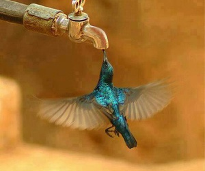 bird, hummingbird, and blue image
