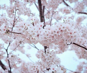bts, blossom, and flowers image