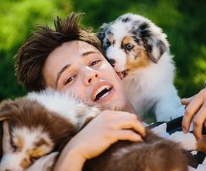 cameron dallas and puppy image