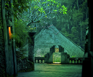 green, nature, and indonesia image