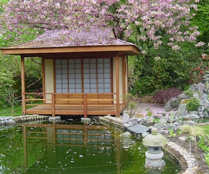 garden, japanese, and sakura image