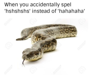 funny and snake image