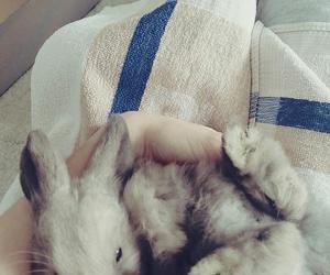 animal, rabbit, and magyar image