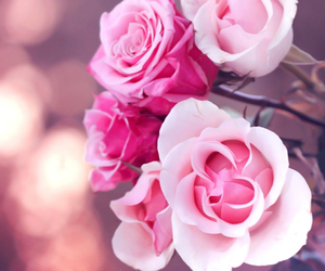 flowers, lovely, and romantic image
