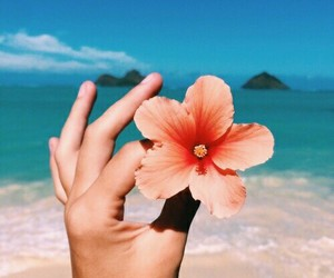 beach, color, and flower image