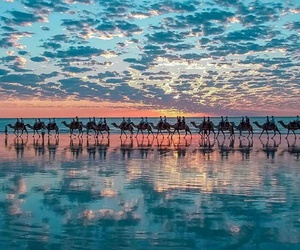 camel, sky, and sunset image