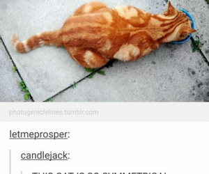 cat, funny, and ginger image