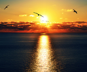 sea, sun, and bird image