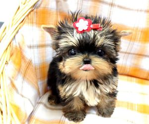 cuteness, micro, and fluffy image