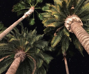 theme, night, and palm trees image