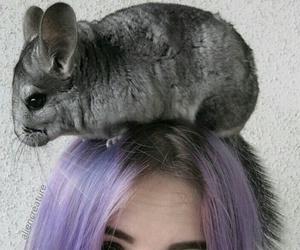 girl, animal, and hair image
