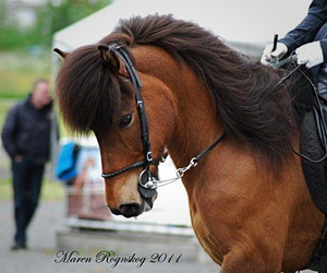 beautiful, competition, and horse image
