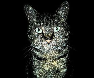 cat, glitter, and black image