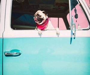 dogs, pugs, and summer image