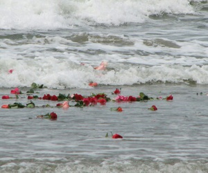 rose, flowers, and sea image