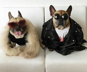 dogs, fashion, and matilda image