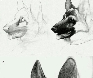 art, dog, and how to draw image