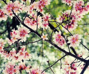 flowers, pink, and japaness image