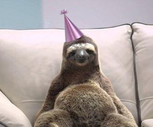 sloth, animal, and birthday image