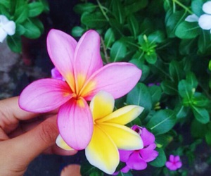 camboja, flowers, and morning image