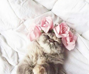flowers, meow, and animal image