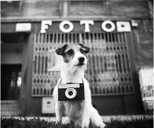 dog, foto, and Poland image