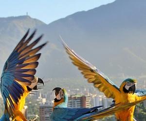 animals, aves, and bird image