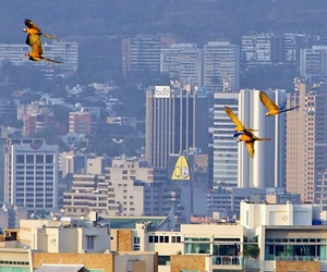 animals, birds, and caracas image