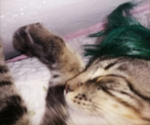 cat, green hair, and punky image