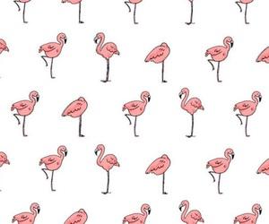 wallpaper and flamingo image