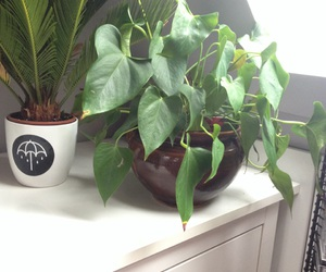 plants and plants are friends image