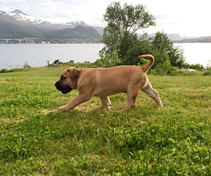 dog, nature, and mountain image