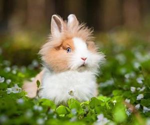 bunnies, rabbits, and bunny image